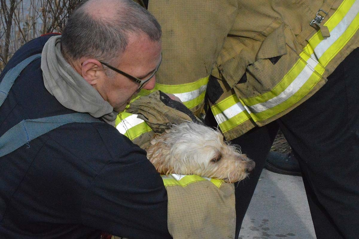 Dog rescue hold