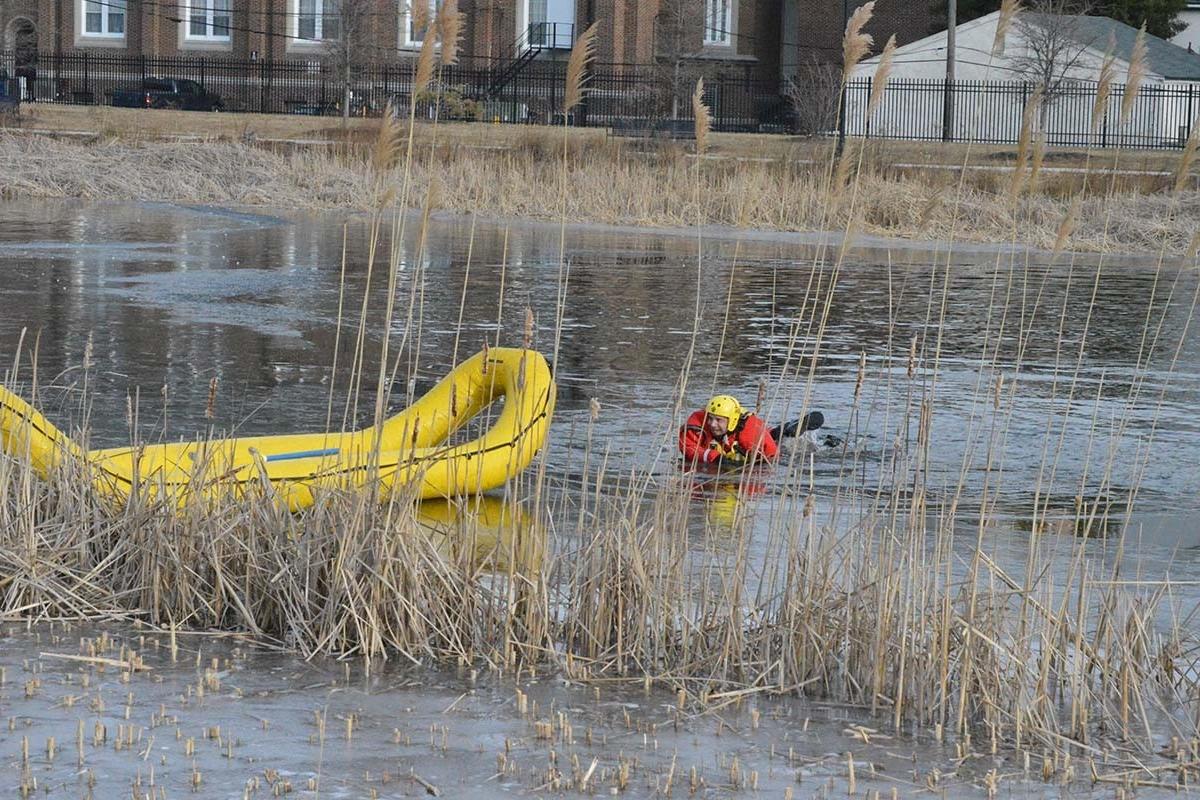 Dog rescue swim