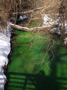 Green water in Phillips Park in Newark (Photo: DFN)