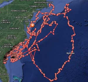 OCEARCH's tracking map shows travels of great white shark Mary Lee since 2012.