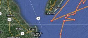 Ocearch tracked Mary Lee off the mouth of Delaware Bay.