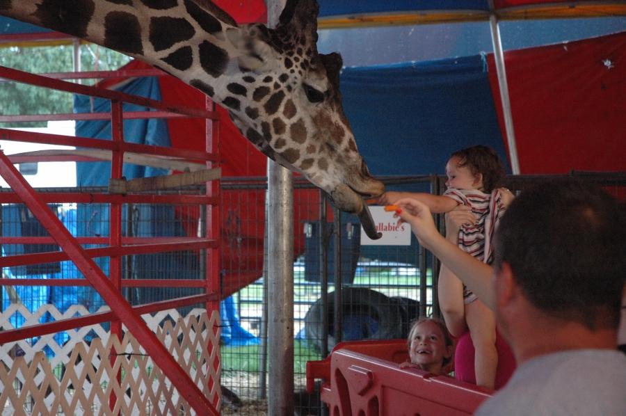 2015 Delaware State Fair giraffe feeding