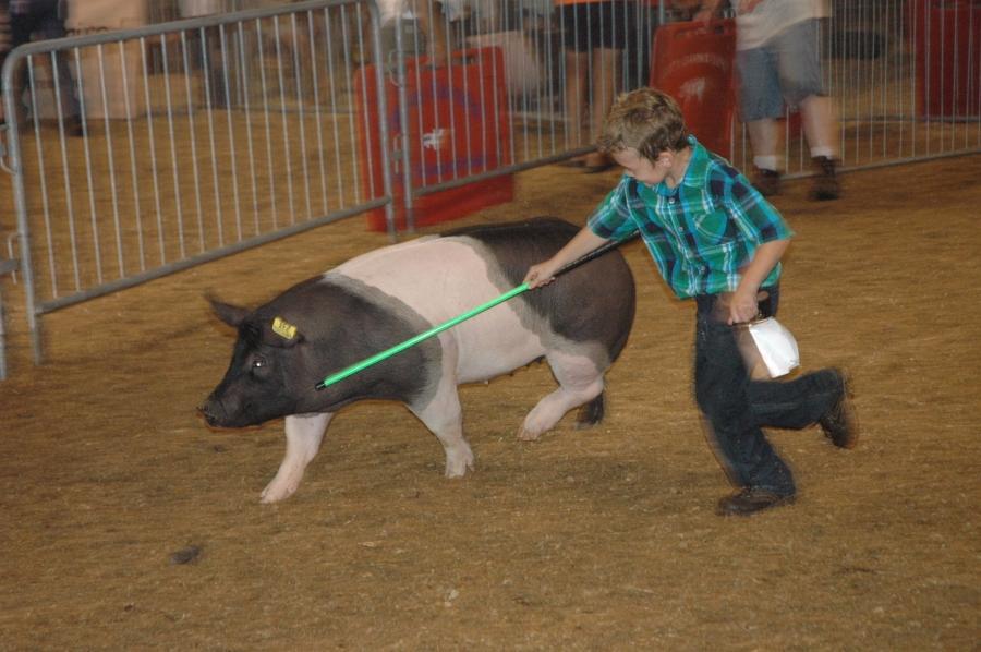2015 Delaware State Fair pig