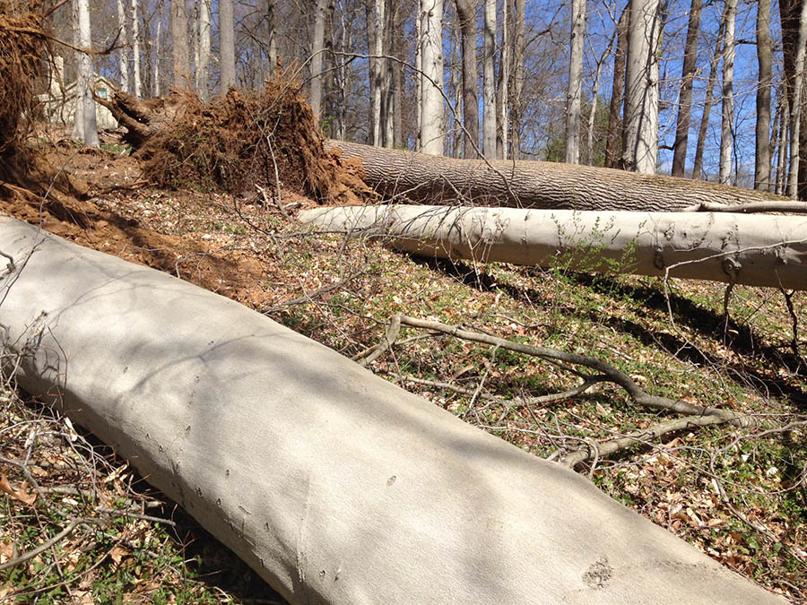 High winds Tuesday toppled several trees along Rockland Road. (Photo: Delaware Free News)