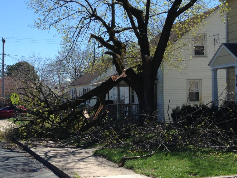 Broken tree on Milford.