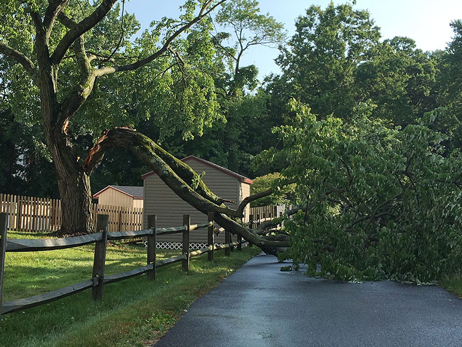 Reader Thomas Gaynor says lightning struck this tree at 2500 Shipley Road in Brandywine Hundred. (Delaware Free News/Reader Submitted)