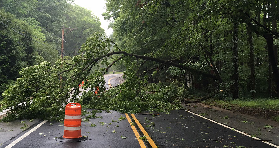 Tree toppled during storm, blocking Darley Road in Brandywine Hundred. (Photo: Delaware Free News)