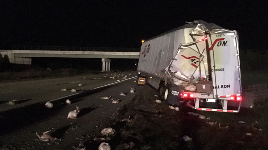 Two tractor-trailers collided on southbound Route 1 near Smyrna. One spilled load of chickens. (Photo: Delaware Free News)