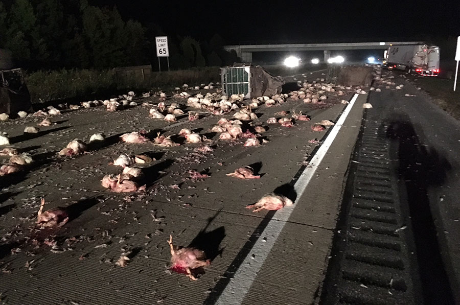 One tractor-trailer spilled load of chickens across southbound Route 1. (Photo: Delaware Free News)