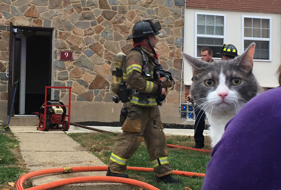 Cat was rescued from burning building after fire broke out at Silver Spring Apartments. (Photo: Delaware Free News)