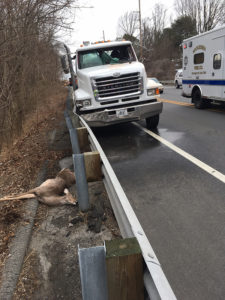 Driver was seriously injured when deer struck windshield of truck on Lancaster Pike in Hockessin. (Photo: Delaware Free News)