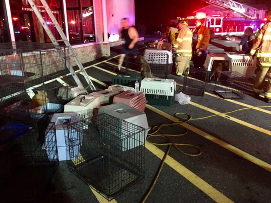 BVSPCA New Castle Fire 3 (002)
