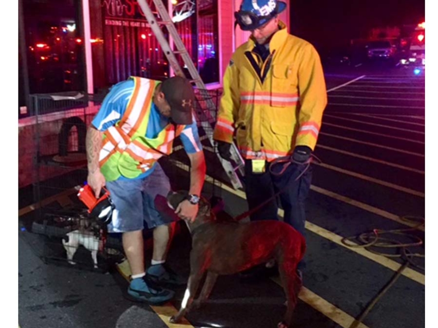 BVSPCA New Castle Fire 4 (002)