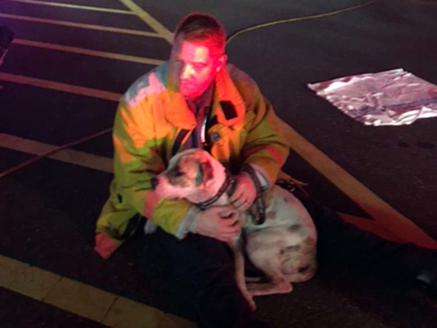 BVSPCA New Castle Fire 5
