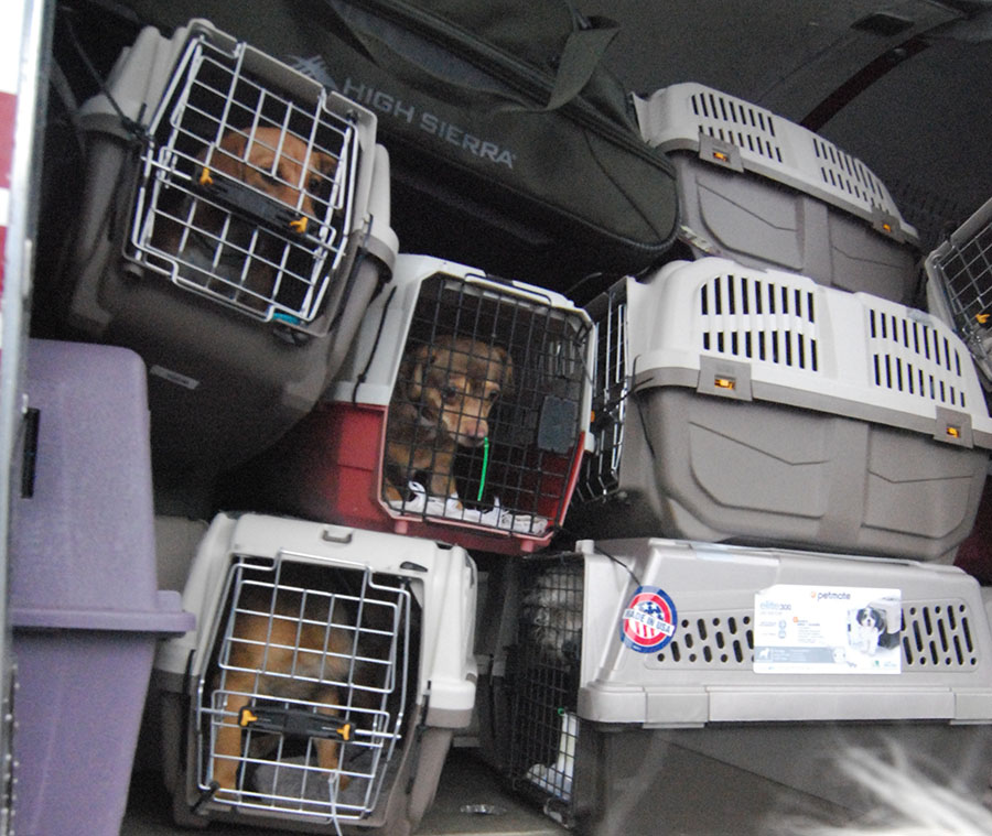 At-risk dogs from Arizona arrived at New Castle Airport. (Photo: Delaware Free News)
